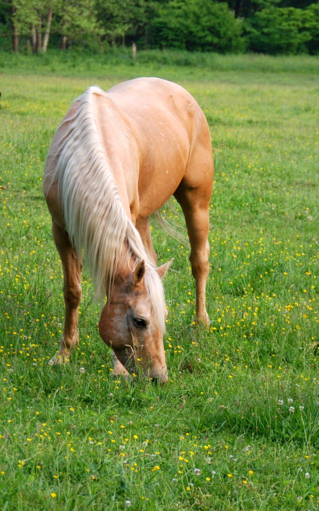 Fresh Horse Shit on Grass stock photo. Image of faeces ...